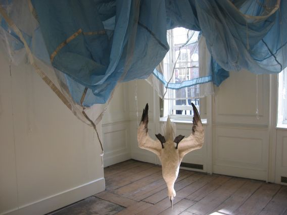 Dorothy Cross, Parachute, 2005, Dimensions variable, Parachute and gannet, Purchase, 2005, Collection Irish Museum of Modern Art